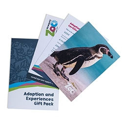 Cert Penguins