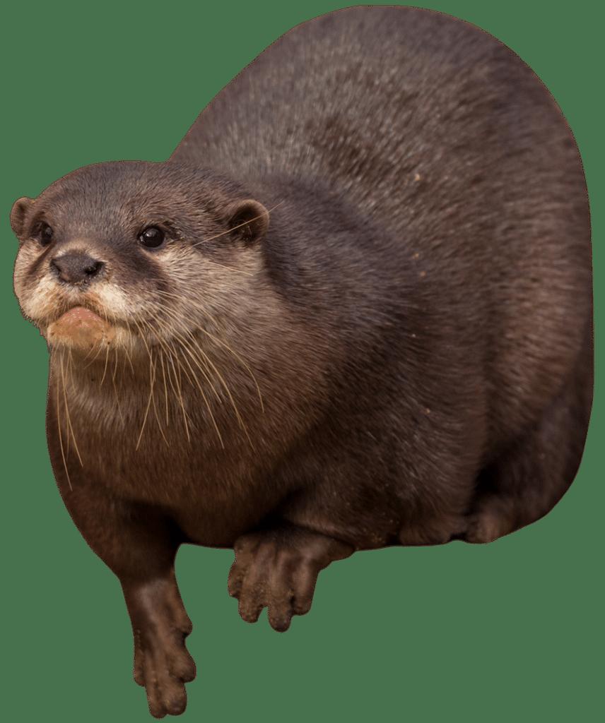 NZ Otter 1