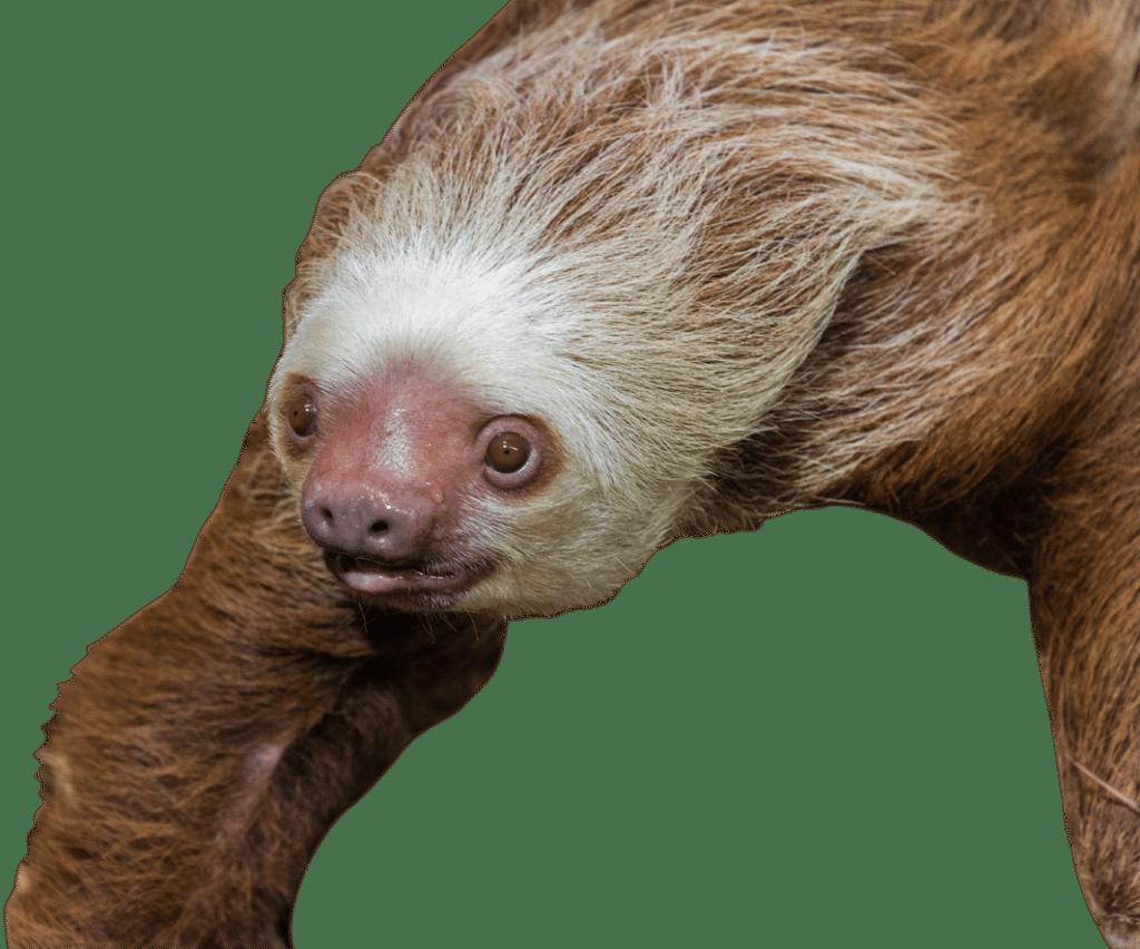 NZ Sloth 2