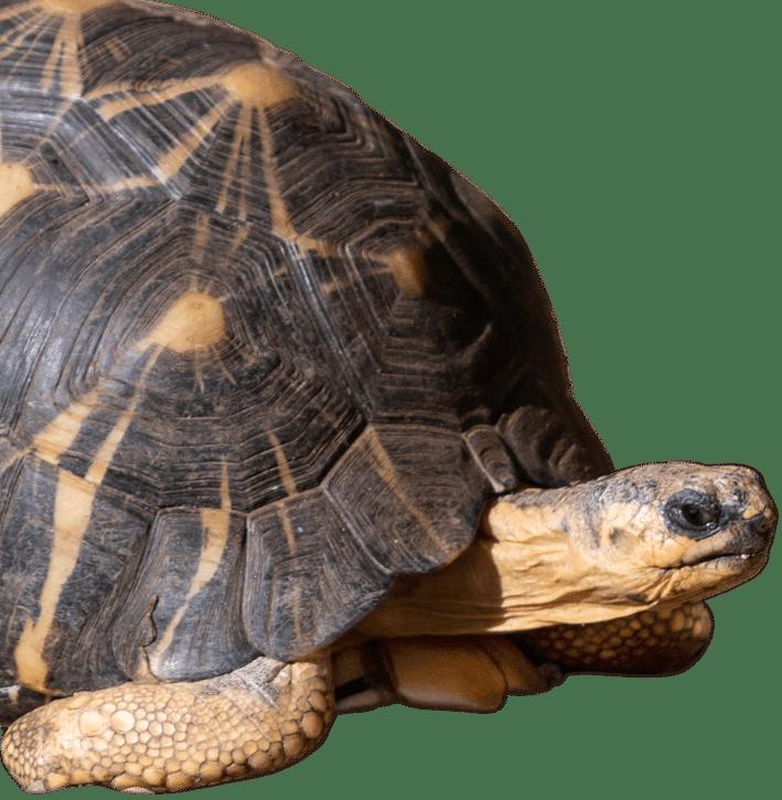 NZ Tortoise 2 e1624545193162