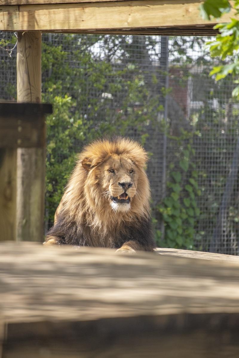 NZ Lions 05 21 ONB LR 24