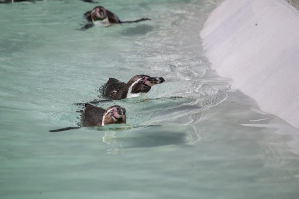 NZ Penguins 05 21 ONB LR