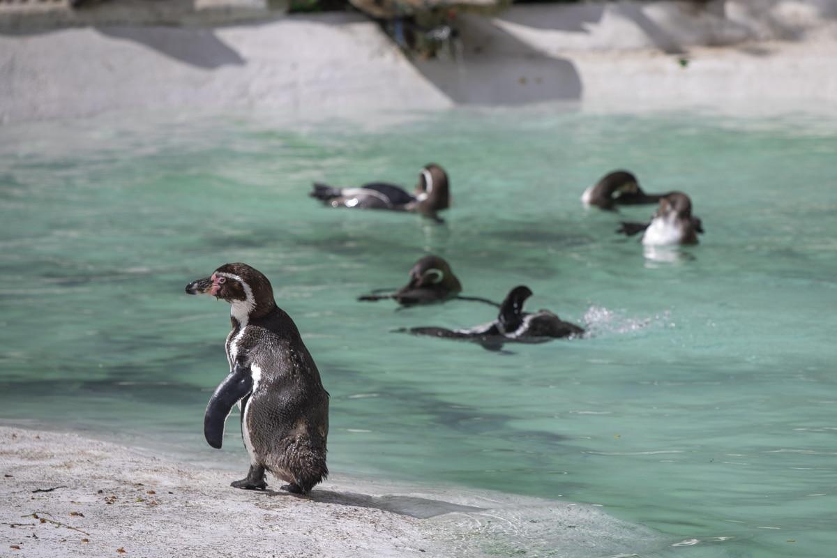 NZ Penguins 05 21 ONB LR 7