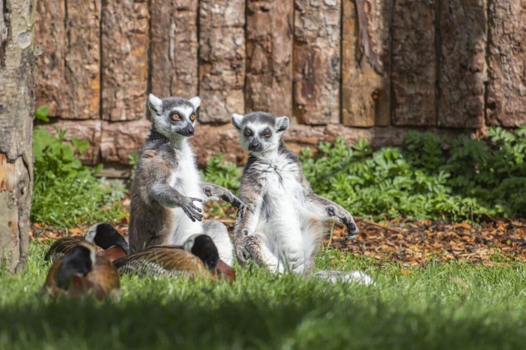 NZ RT Lemur 05 21 ONB LR 3