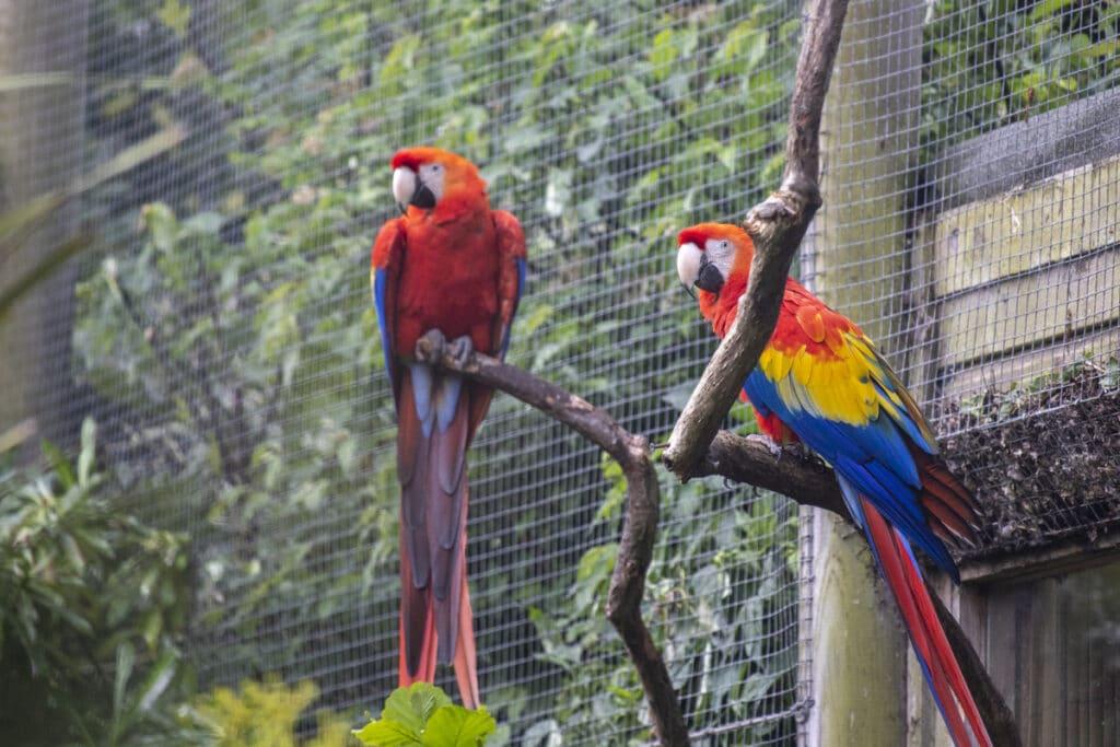 NZ Scarlet Macaw 05 21 ONB LR 15