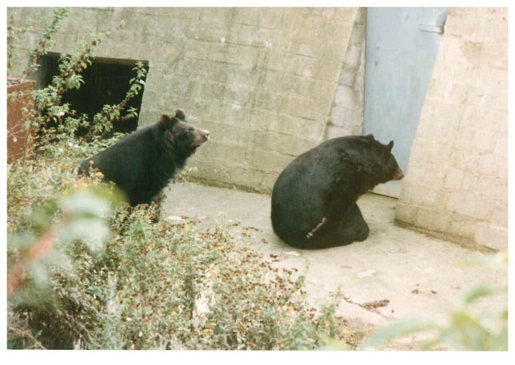 Q2 bear photo 1970s 600dpi